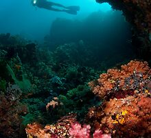 Diver in coral garden by Stephen Colquitt