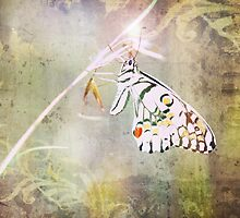 Once Upon A Butterfly by Ann Marie  Barnes