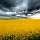 Golden Fields - Canola Field, Kanmantoo - Callington, South Australia by Mark Richards
