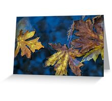 sycamore canyon creek Greeting Card