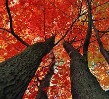 Autumn in the Trees by Gayle Dolinger
