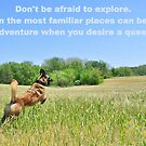 Explore by Scoutdogs