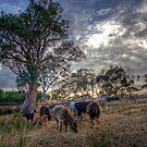 Dawn - Private Farm, Kanmantoo, The Adelaide Hills, SA by Mark Richards