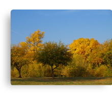 Fall Comes to Dunham Park Canvas Print