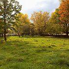 Meadow by Eunice Gibb