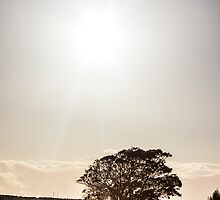Solitary tree silhouetted in afternoon sun by Thomas Lynch