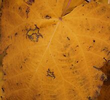 Big Yellow Leaf by Stephen Thomas