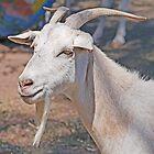 Billy Goat Gruff by Graeme  Hyde