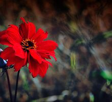 Colours Of Autumn-Dahlia by naturelover
