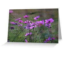 Autumn Colours - Purple Windflowers Greeting Card