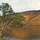 Tree on Loch Sligachan (Skye) by JPassmore