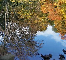 Reflections of Fall by Monnie Ryan