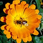 Yellow Flower With Bee by mamasita