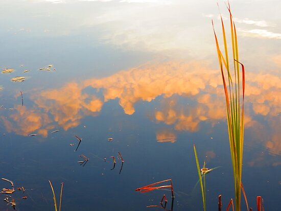 Reed Clouds by Alex Call