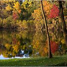 Fall Grace by Bill Coughlin