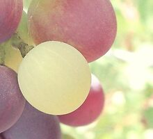 Grapes by Angela Micheli Otwell