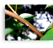 Little Bug on a Catalpa Tree Branch. Canvas Print