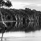 Lake Ainsworth, early morning, No 4 monochrome by Odille Esmonde-Morgan