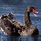 oh happy day! ... Black Swan by mosaicavenues