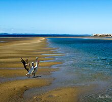 Hervey Bay by Julia Harwood