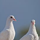 Fantailed Doves by M.S. Photography & Art