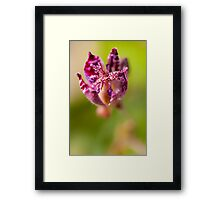 The Common Toad Lily Framed Print