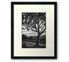 Bench & Tree Framed Print
