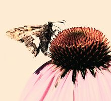 Coneflower Visitor by Sharon Woerner