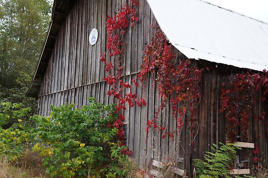 Seasoning the old barn by Rainydayphotos