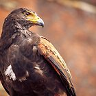 Eagle 2 by MarceloPaz