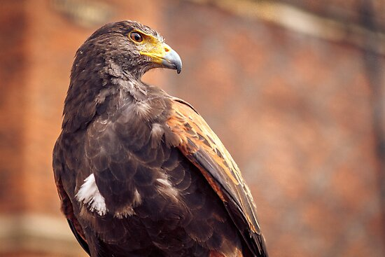 Eagle 2 by MarceloPaz