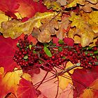 Glorious Autumn by Jacqueline Longhurst