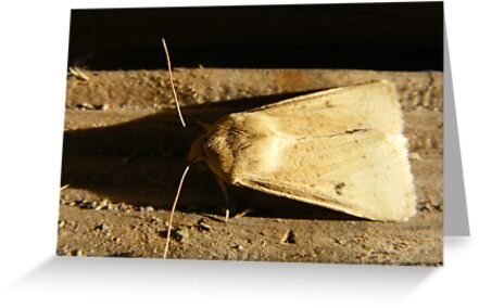 Moth On Wood (Bug) by Russell Voigt