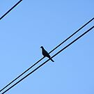 Power line (Bird) by Russell Voigt
