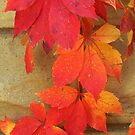 Autumn Red Vines by lorilee