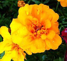 Fleur Jaune by Joshua578569