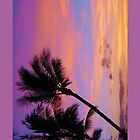 Tropical Sunset by Tiffany Muff