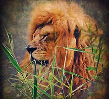 A Lion portrait by AD-DESIGN