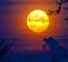 Red moon light by Markus Landsmann