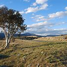 Jindabyne View by Catherine Davis