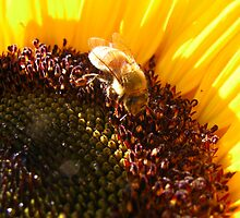 The Busy Bee by Christine Ertl