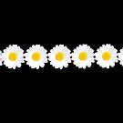 Daisy chain by shalisa