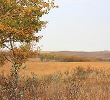 Prairie Autumn by Jim Sauchyn