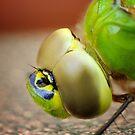 Dragonfly by lumiwa