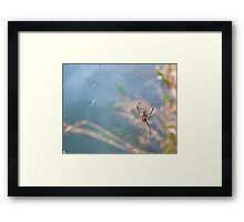 On a Web Framed Print