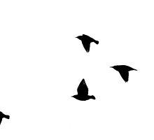 Flight by lindsycarranza