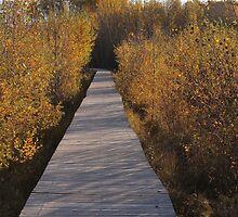 Coloured Boardwalk by Kathi Arnell