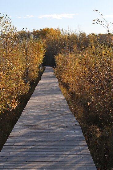 Coloured Boardwalk by Kathi Arnell