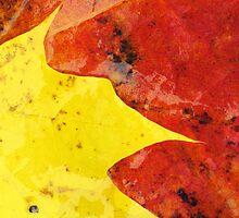 28.9.2012: Leaves by Petri Volanen