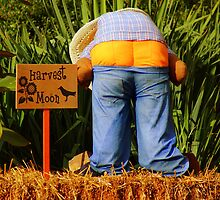 HARVEST MOON! by Ruth Lambert